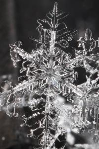 The Adventures of a Unique Snowflake